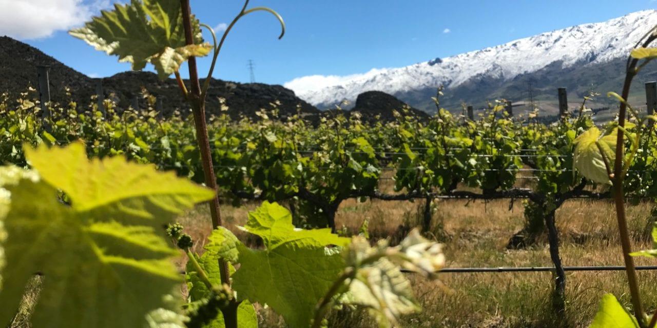Winemaker Paul Pujol: Prophet's Rock – NZ Wine Podcast 29