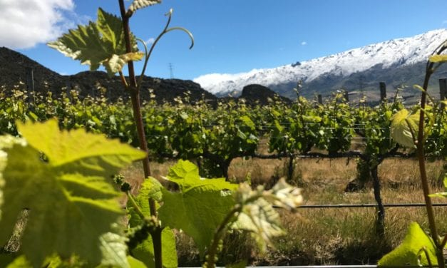 Winemaker Paul Pujol: Prophet's Rock – NZ Wine Podcast 29