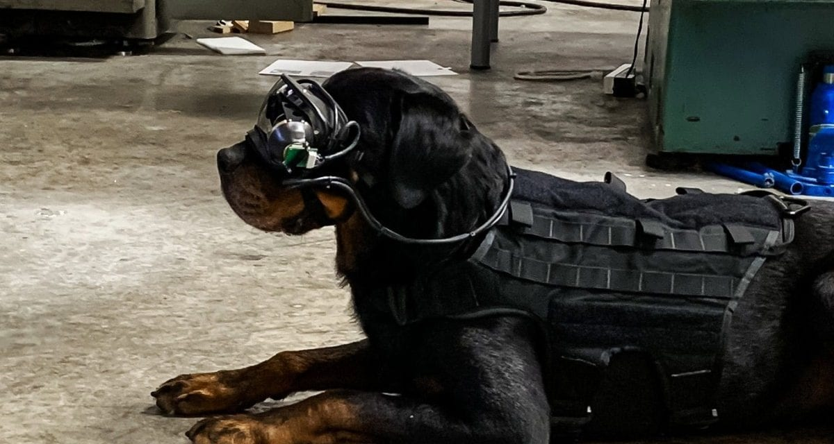 Hacking Apple, Dogs using Virtual Reality, NZ Government vs Encryption