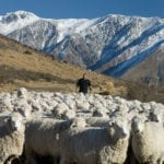 Is Sheep and Beef Farming already Carbon Neutral? Possibly, Dr Brad Case, AUT